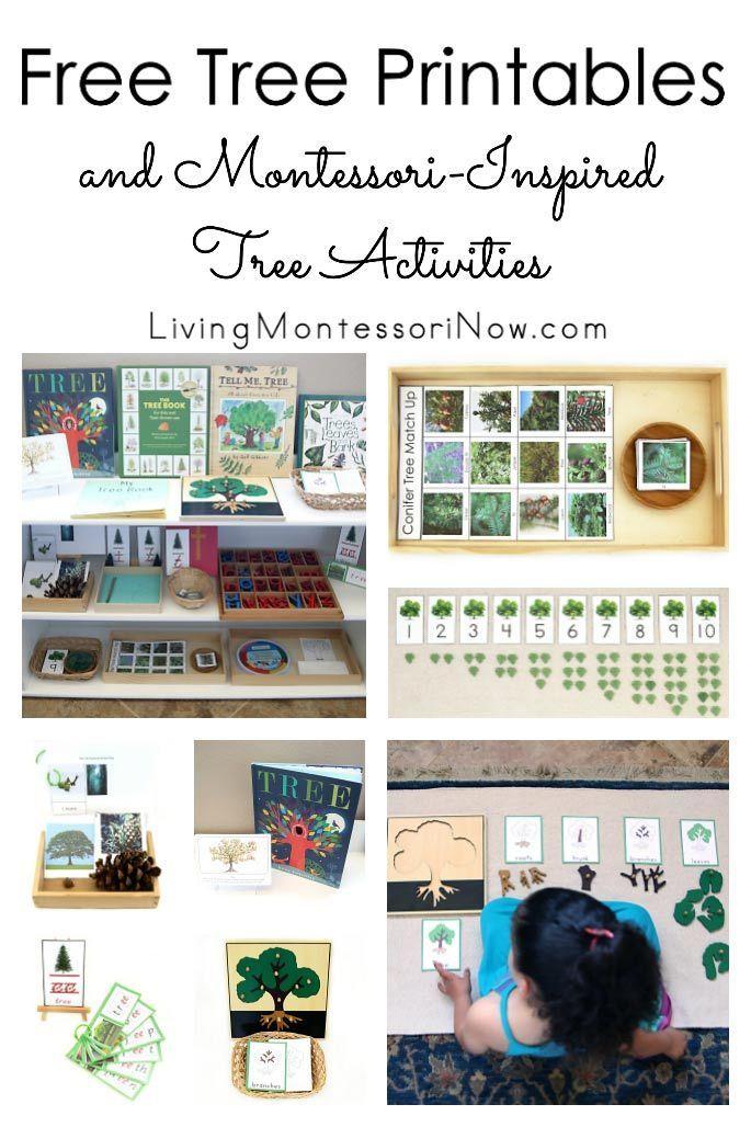 Free Tree Printables and Montessori-Inspired Tree Activities