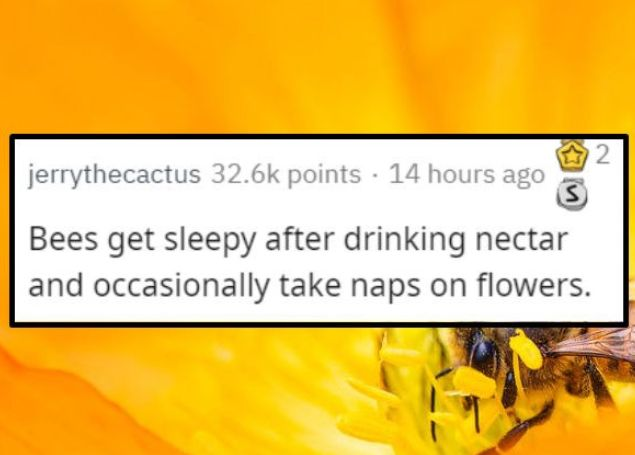 Here are some nicer facts that are on the uplifting side. #nice #good #cute #aww #facts