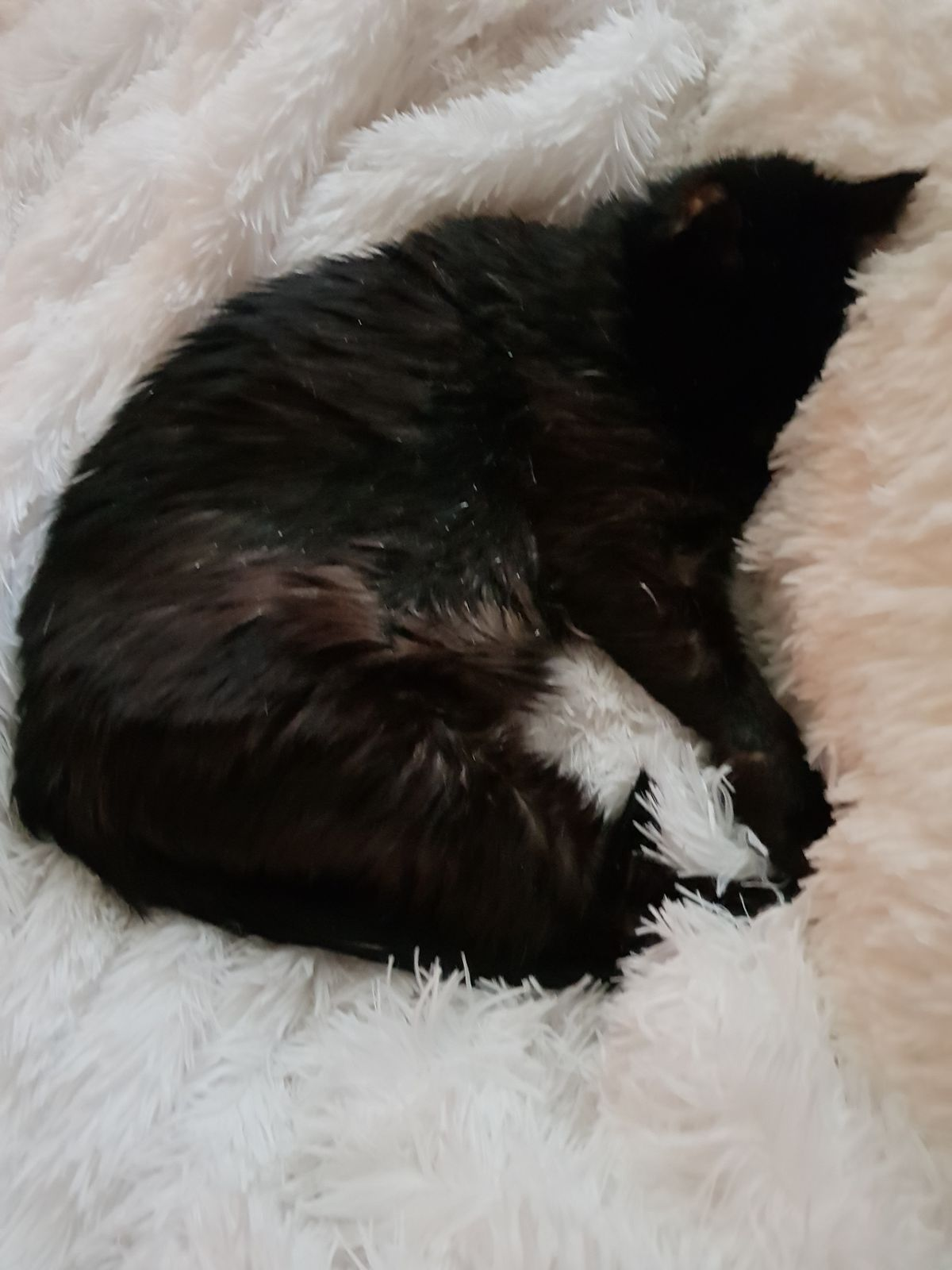 My Precious beloved fur daughter in her senior year of 15