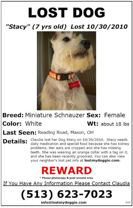 ... Missing Dog Flyer Template Create Flyer, 8 Psd Lost Dog Flyer   Missing  Pet Template ...