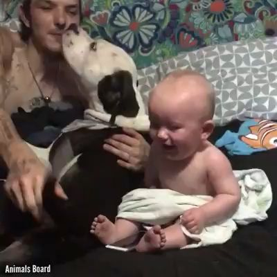 All these babies laugh will melt your heart ❤️♥️♥️ please follow Animals Board for more videos