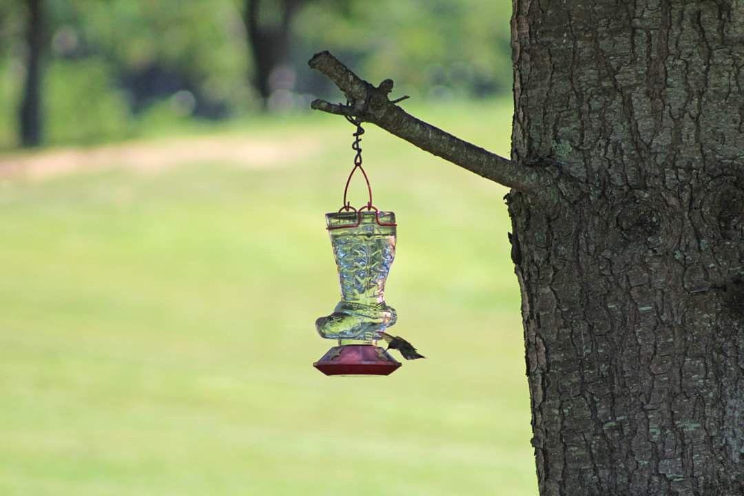 Hummingbird in Frankford, WV Outdoor decor, Decor, Bird