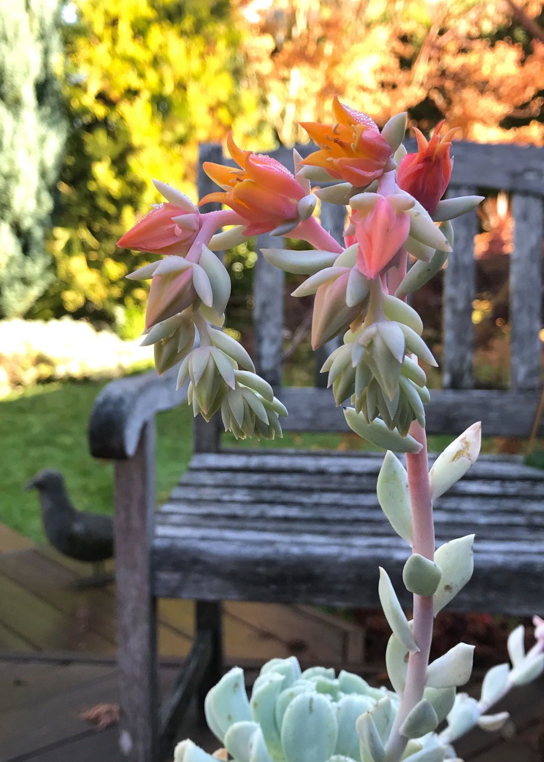 The Bittersweet Change From Summer to Fall – FineGardening