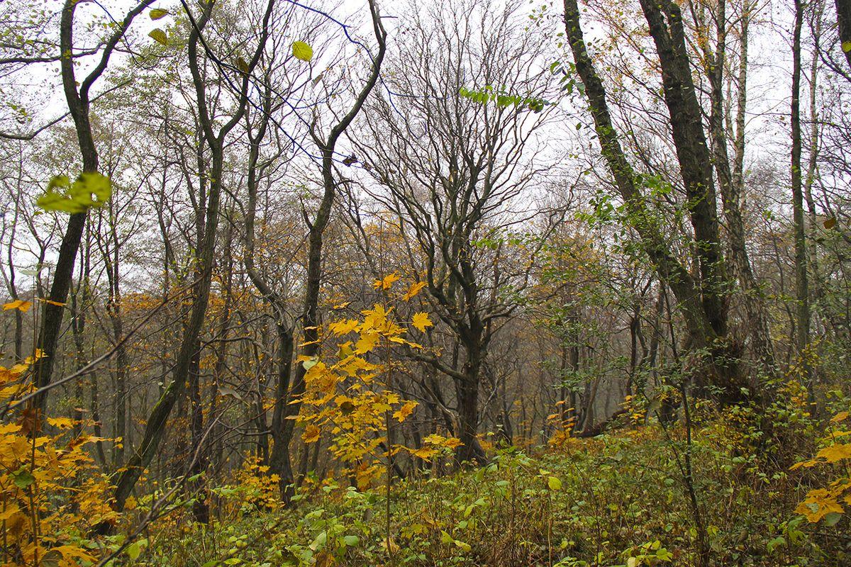 В лесу Пионерского. Фото: Evgenia Shveda