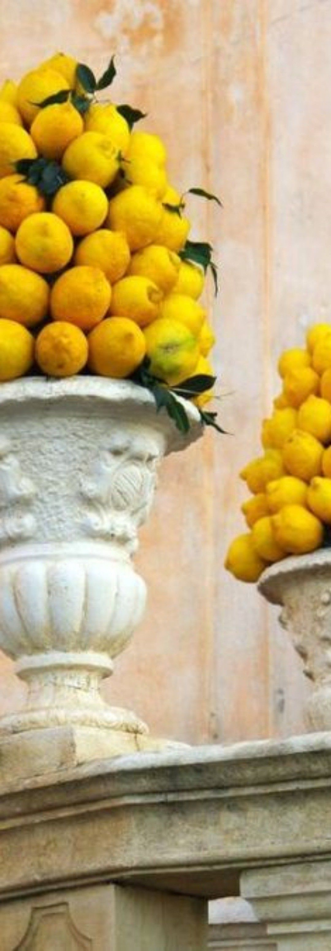 Pin by Caryatid on Citrus Rich girl, Fruit, Italy