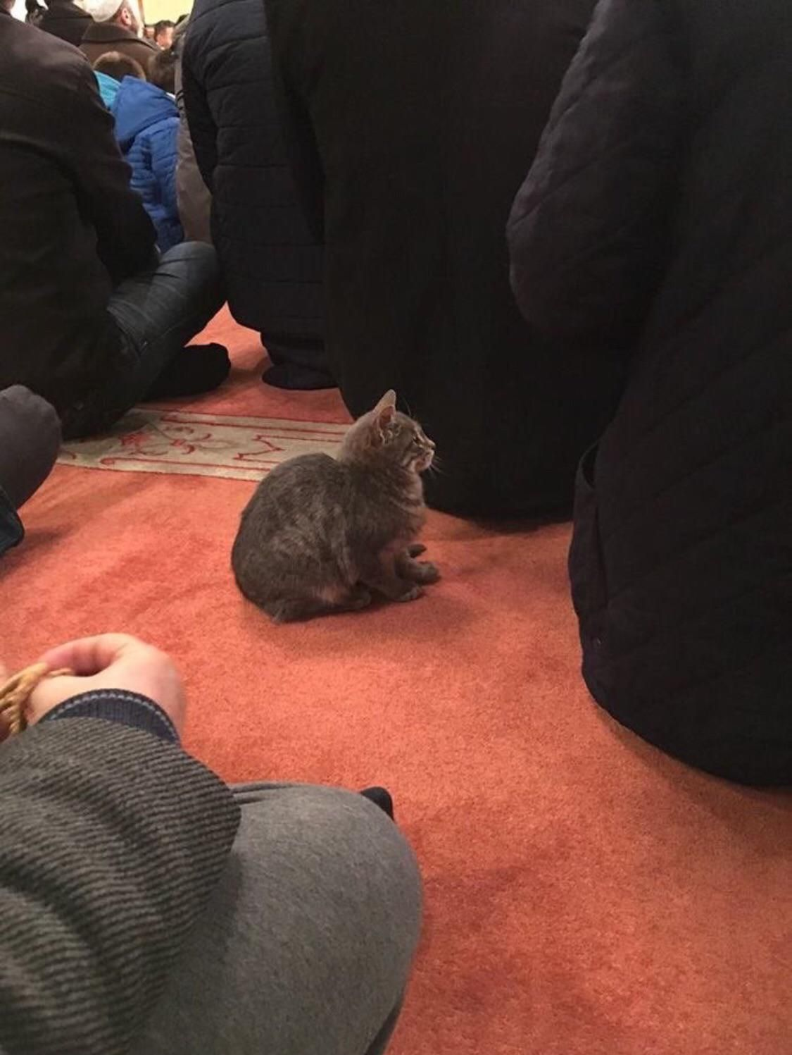 Turkish cat listening to the sermon in local mosque. It just sat there quietly the whole time.