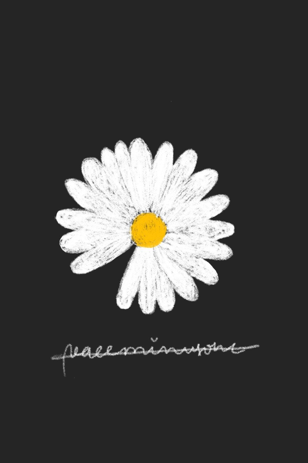 peaceminusone daisy flower gdragon wallpaper Bunga