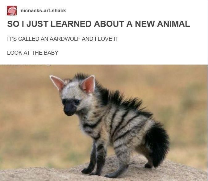 The Aardwolf could have it's own Gisney movie.