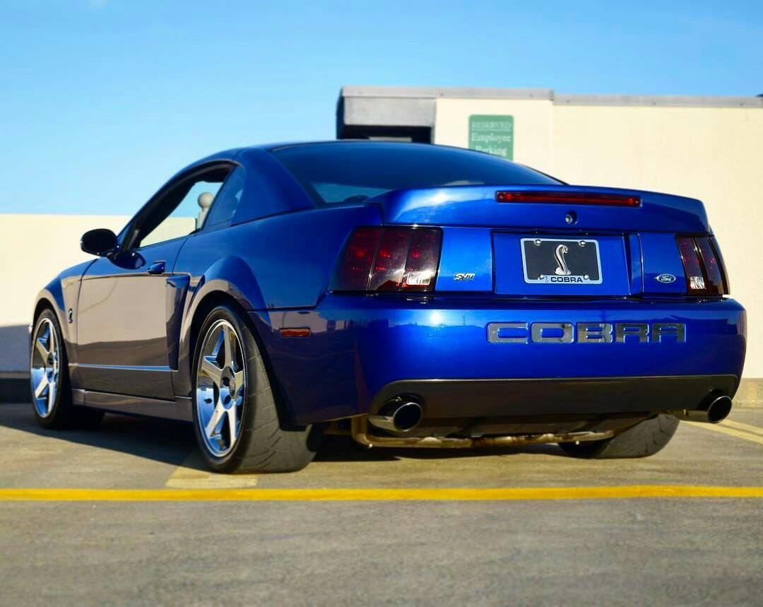 06 Terminator Mustang