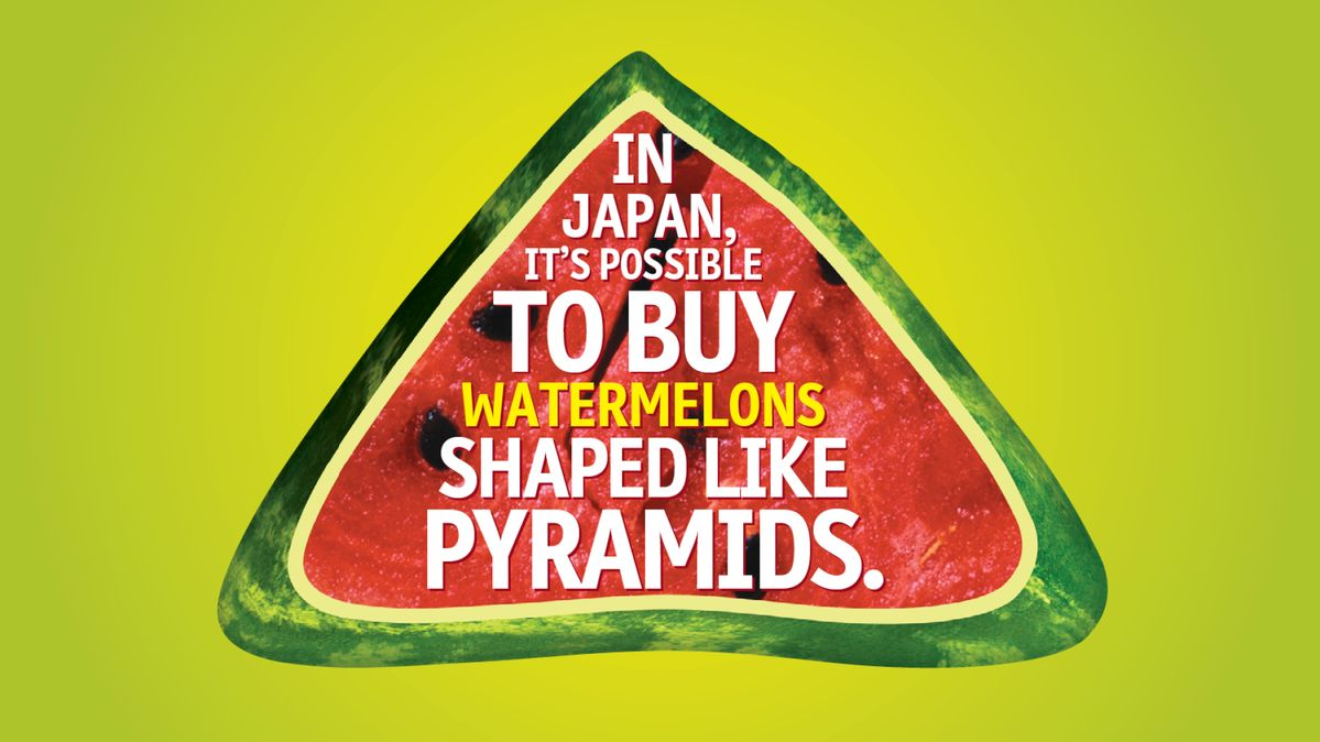 WEIRD BUT TRUE! Facts Inspired by Explorer Academy