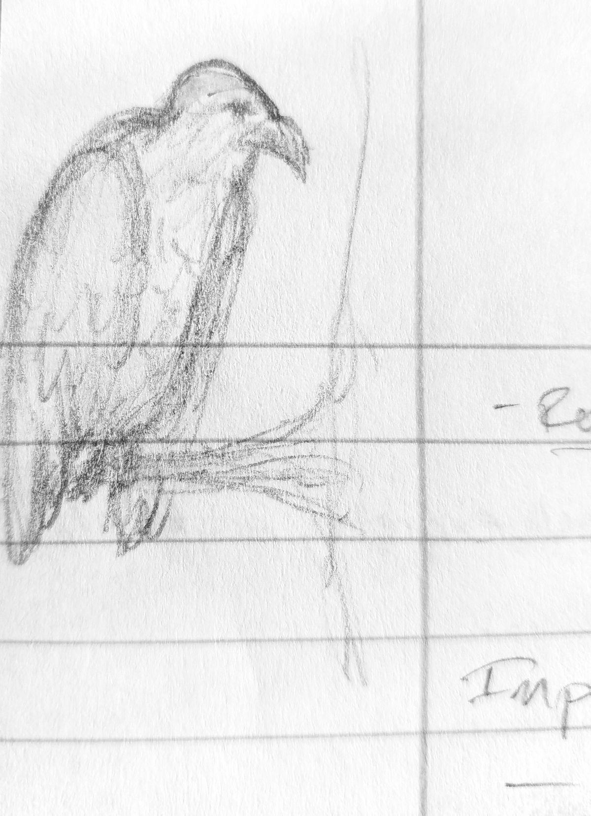 Pin by Savannah Stewart on 365 Days of Birds Art