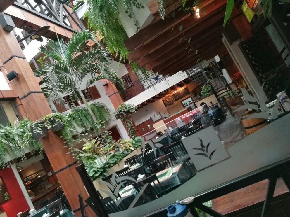Restaurante El Patio San José Costa Rica Plants