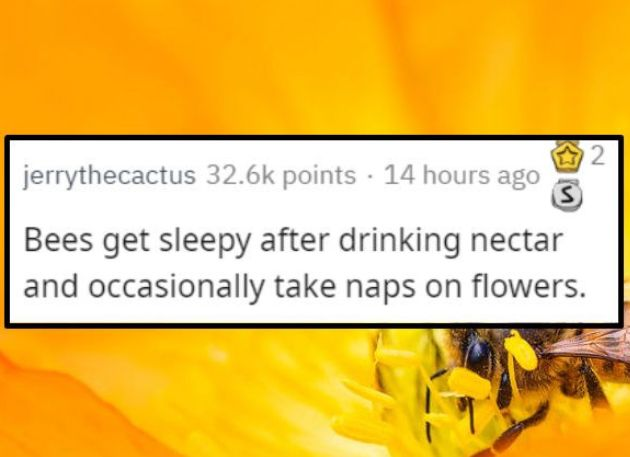 We've seen a lot of messed up facts, so here are some nicer facts that are on the uplifting side. #facts #nice #aww #wholesome #happy