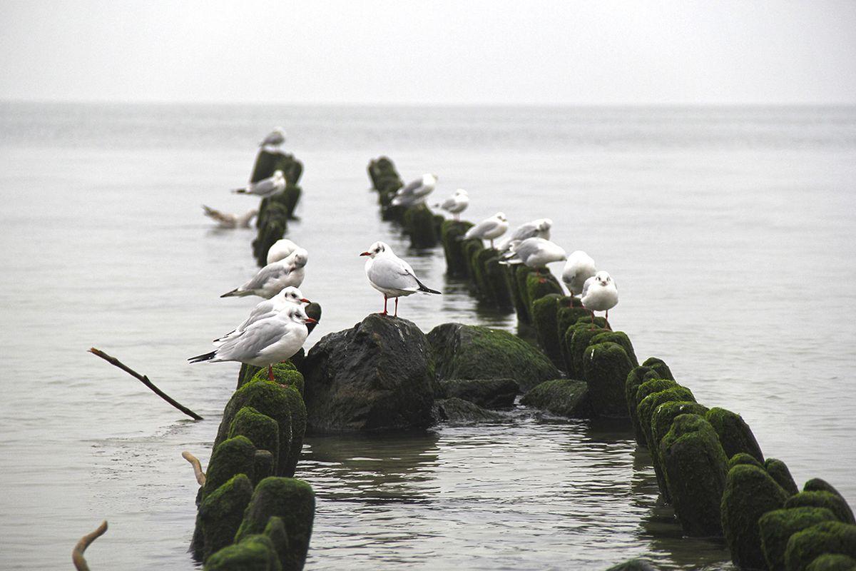 На Балтийской море (Калининградская область). Фото: Evgenia Shveda