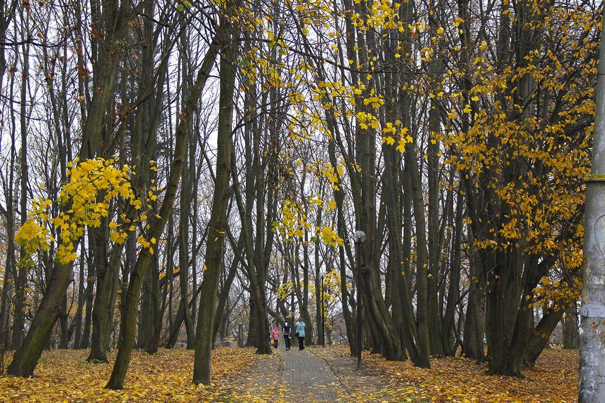 В парке города Пионерский. Фото: Evgenia Shveda