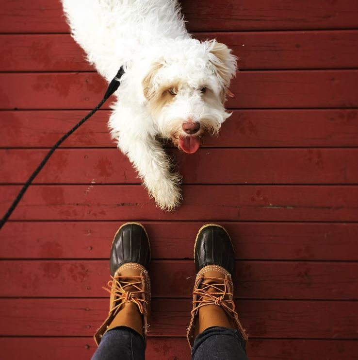 Stick out your tongue if you're ready for a walk. 😛 (📷: Instagram's lindsaymarcelle) (L.L.Bean Boots)