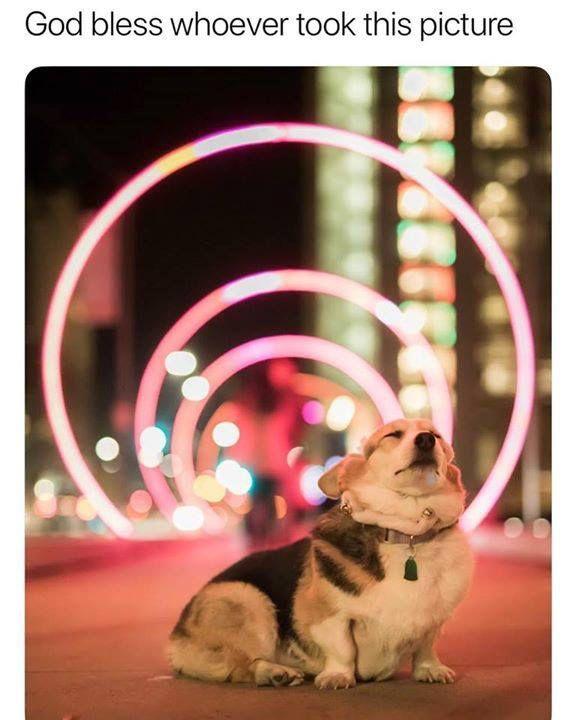 Angel bean! #doggo #Dog