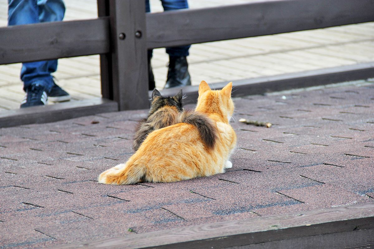 Зеленоградские котики на променаде у Балтийского моря. Фото: Evgenia Shveda
