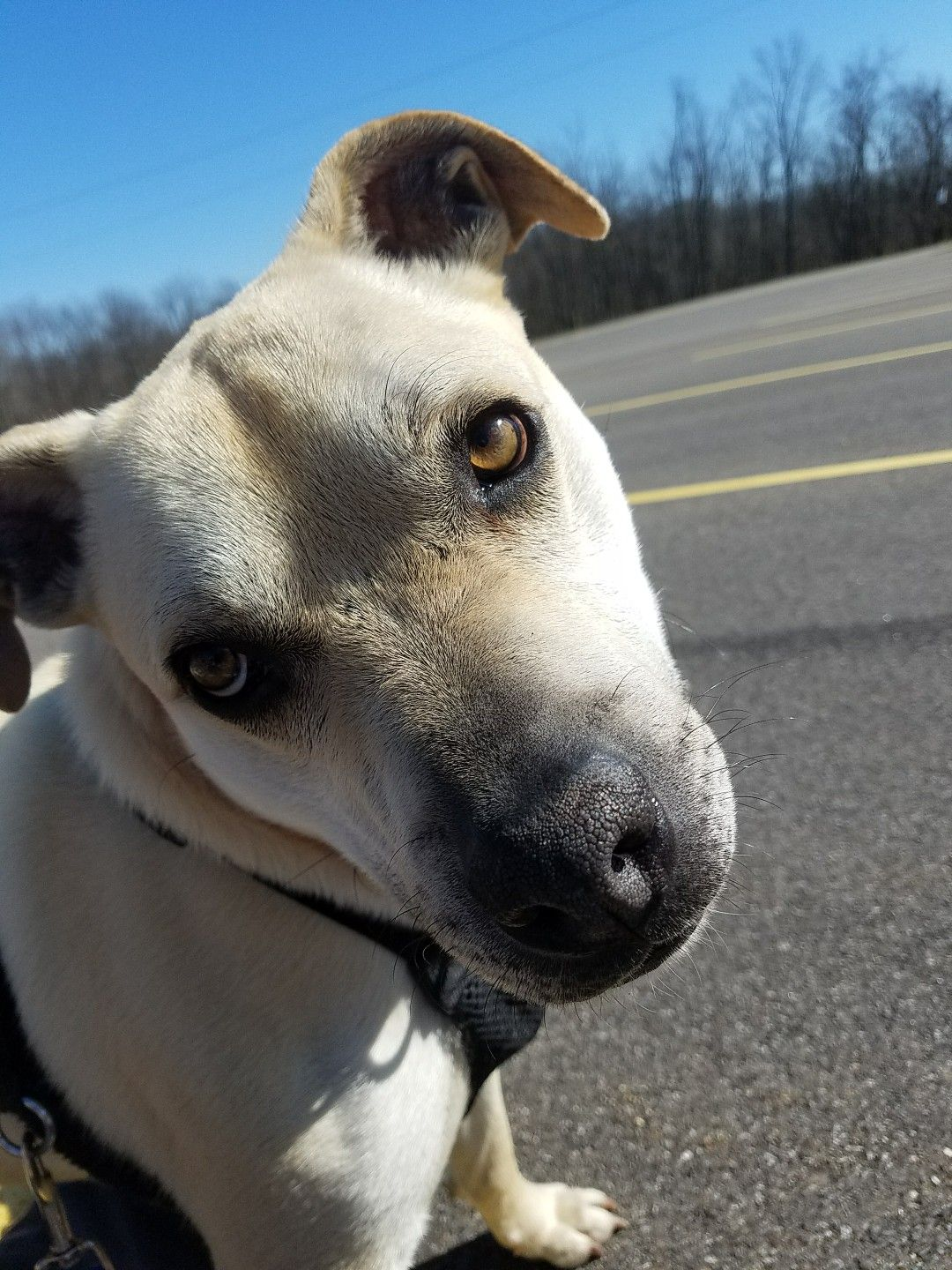 This Is Peanut At Belmont County Animal Shelter In Ohio He Is