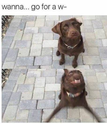 We love dogs and we also love memes, sooo why not combine them? #Dogs #DogMemes Memes #Animals