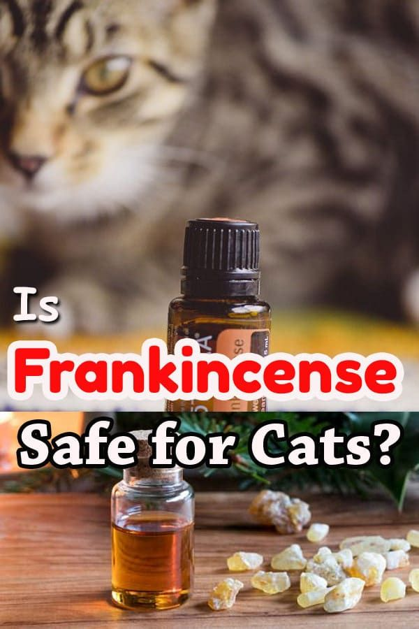 Is Frankincense Safe for Cats? If yes, what are its benefits? learn in detail in this informative post!