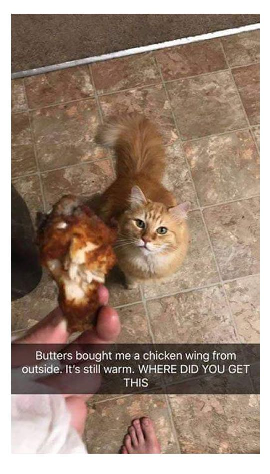 #1 The cat brought the owner a chicken wing from outside. It's still warm.#2 fails captcha 4 times#3 gift for your ex : bath bomb#4 Balto in Alska tundra in 1925#5 say goodbye to the man bun and say hello to the he-hive#6 mom vs dad#7 me fighting 3 different…