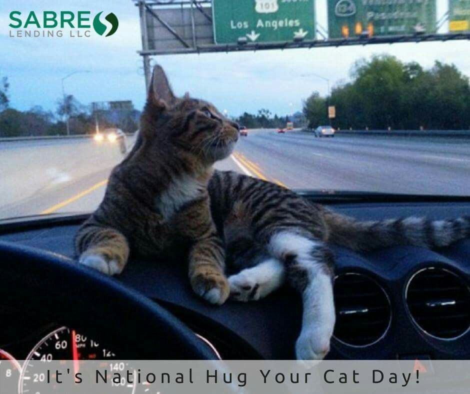 It's National Hug your Cats Day! throwback june love