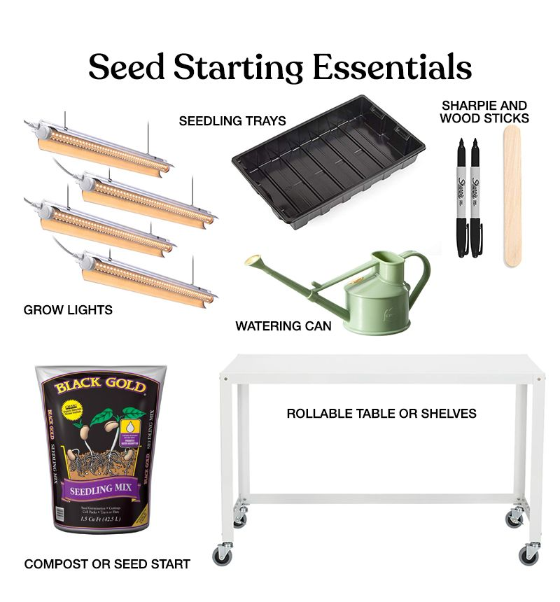 Essential items for starting your seeds Indoors for beginners