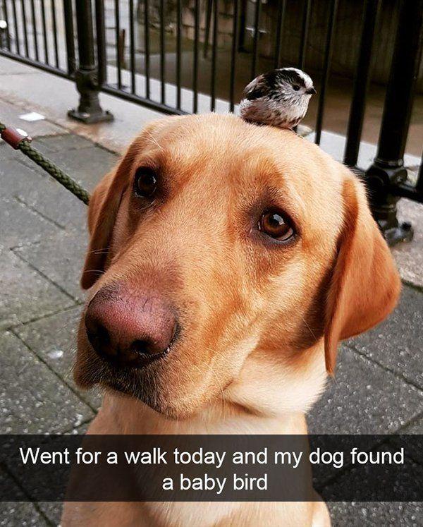 50 funny animal snapchats