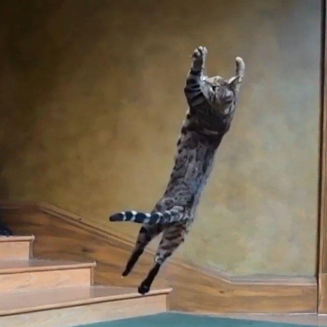 "4,727 gilla-markeringar, 42 kommentarer - OutofMind (@outofmind) på Instagram: ""Cats always land on their feet By @petsncharge . Follow @outofmind #bengalkitten #ability #acrobat…"""