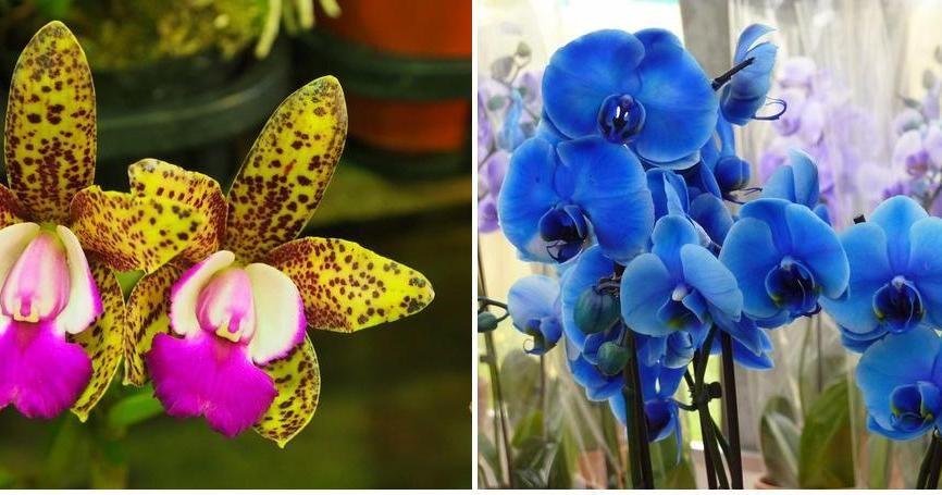 Cómo regar las orquídeas (contenido muy completo y útil)