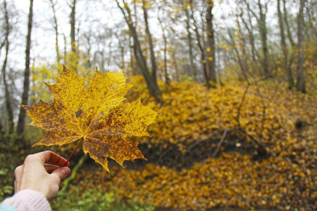 Лес в Пионерском. Фото: Evgenia Shveda
