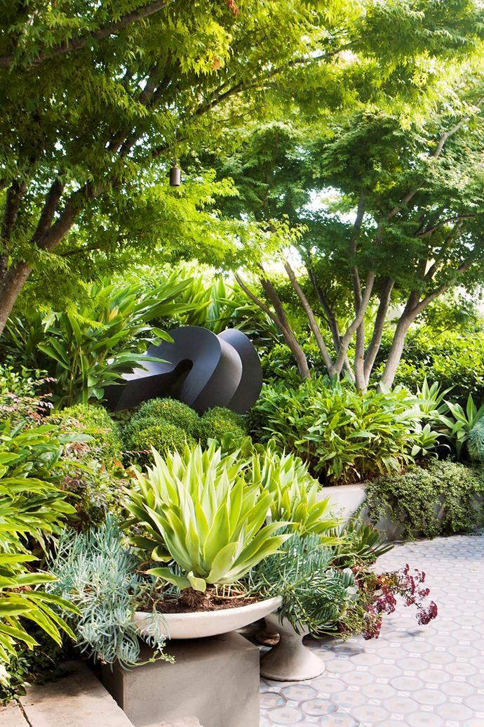 An imposing bronze sculpture by Australian-American artist Clement Meadmore makes a statement in the entry garden, under a canopy of transplanted maples, lush foliage and clipped English box (*Buxus sempervirens)*.