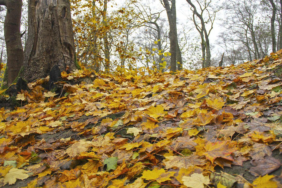 Ноябрьский лес Калининградской области. Фото: Evgenia Shveda