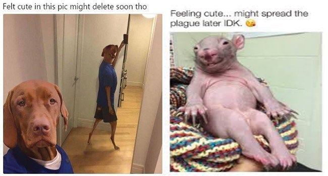 These animals were feeling cute in their pic, but most of them mentioned they might possibly delete the picture later! Don't worry, we managed to save a few before that happened.#cute animals # selfie # animal photos # #felling cute memes # animal memes # funny memes