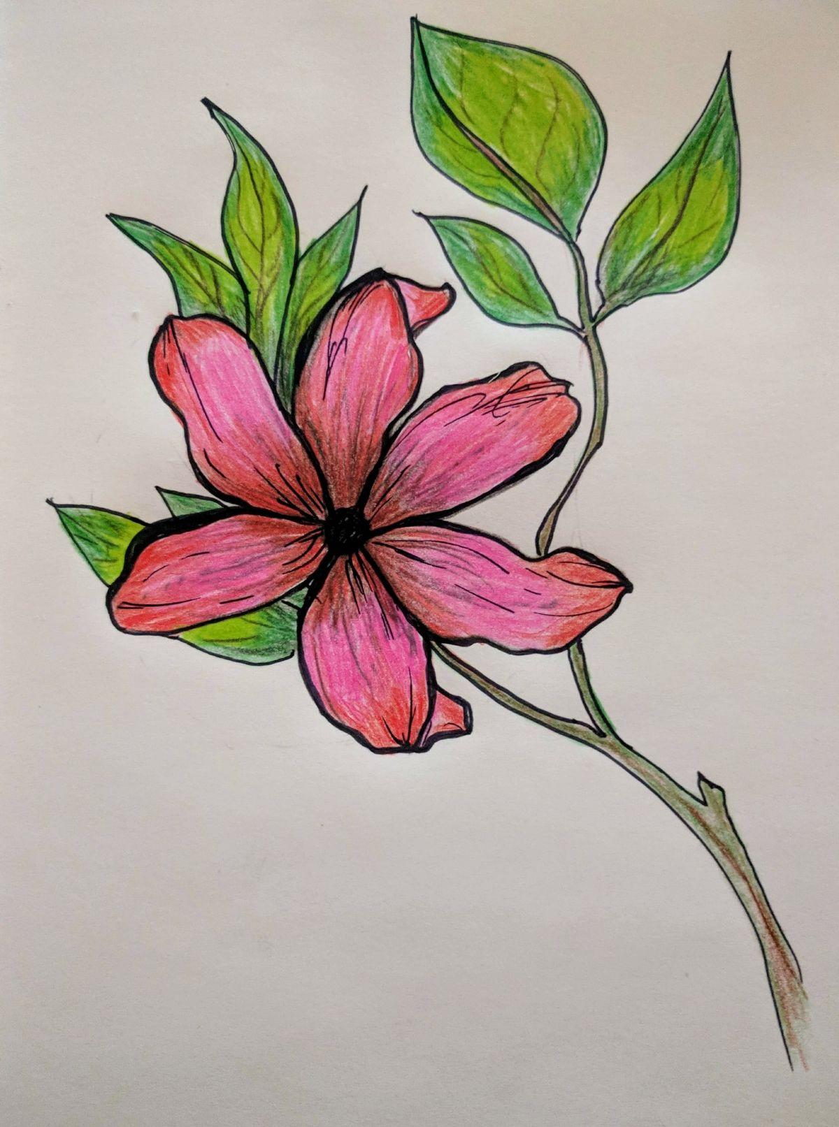 flower drawing colors spring Lotus flower tattoo