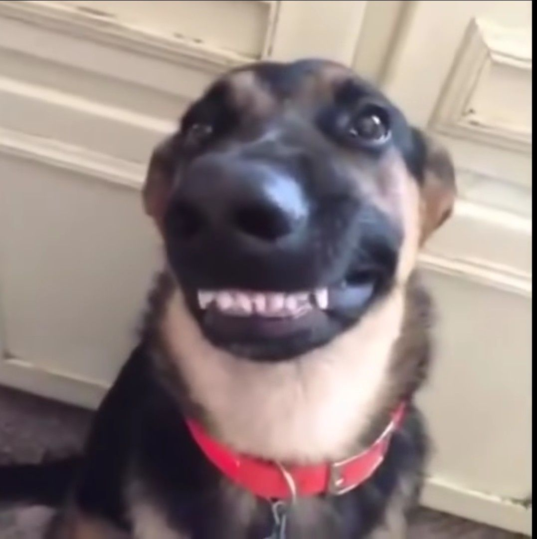 Smile For The Camera Funny Dog Videos Cute Animal Videos