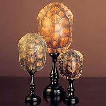 Goods from India- tortoiseshells