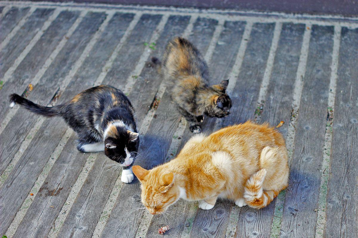 В курортном городке все рады подкормить котиков. Фото: Evgenia Shveda