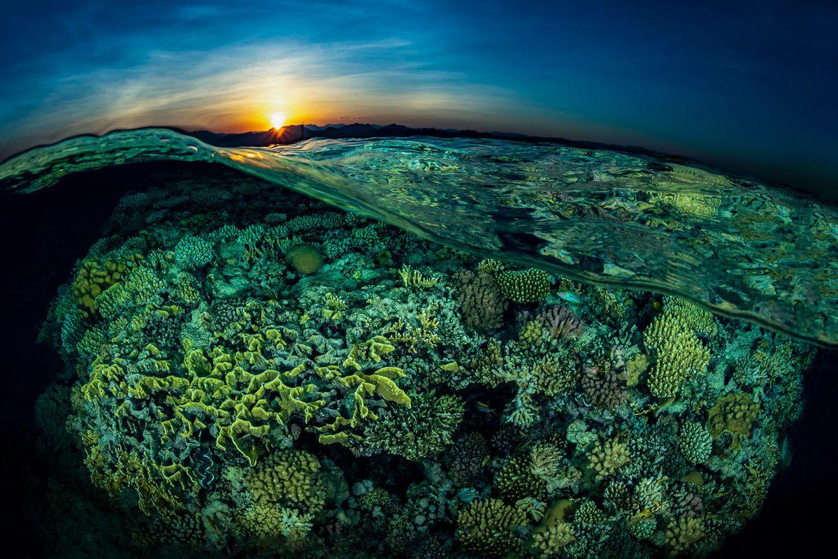 Underwater photography by Tobias Friedrich, Sony World Photography Awards
