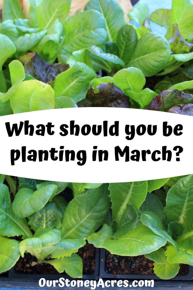 What should you be Planting in March