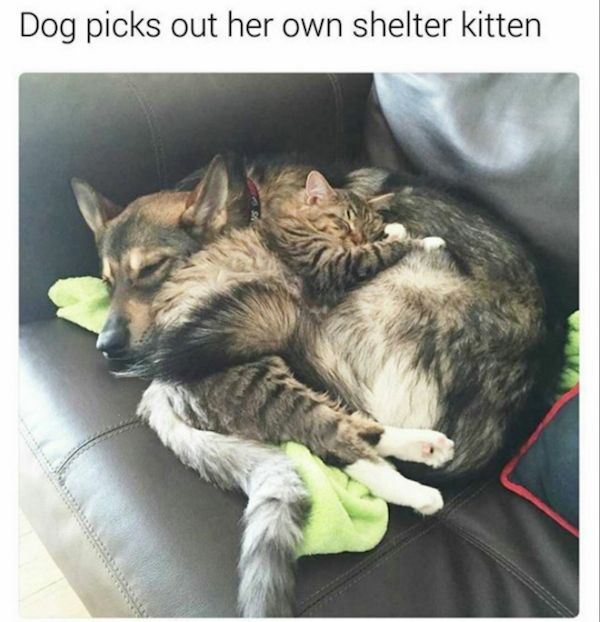 37 Wholesome Pics to Brighten Your Day