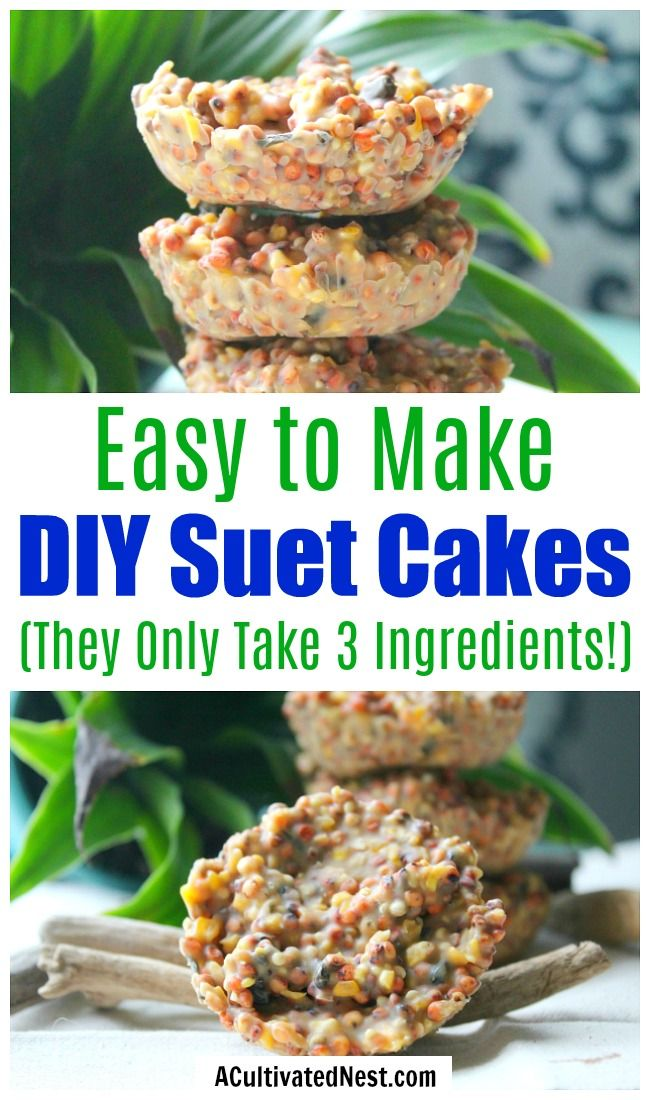 3 Ingredient DIY Suet Cakes- Want to keep your neighborhood birds well fed? Then you need to make these 3 ingredient DIY suet cakes! They're easy to make and full of protein to keep wild birds full! | birdseed suet cakes, how to make suet cakes, feed backyard birds, #birdseed #DIY #suet #ACultivatedNest