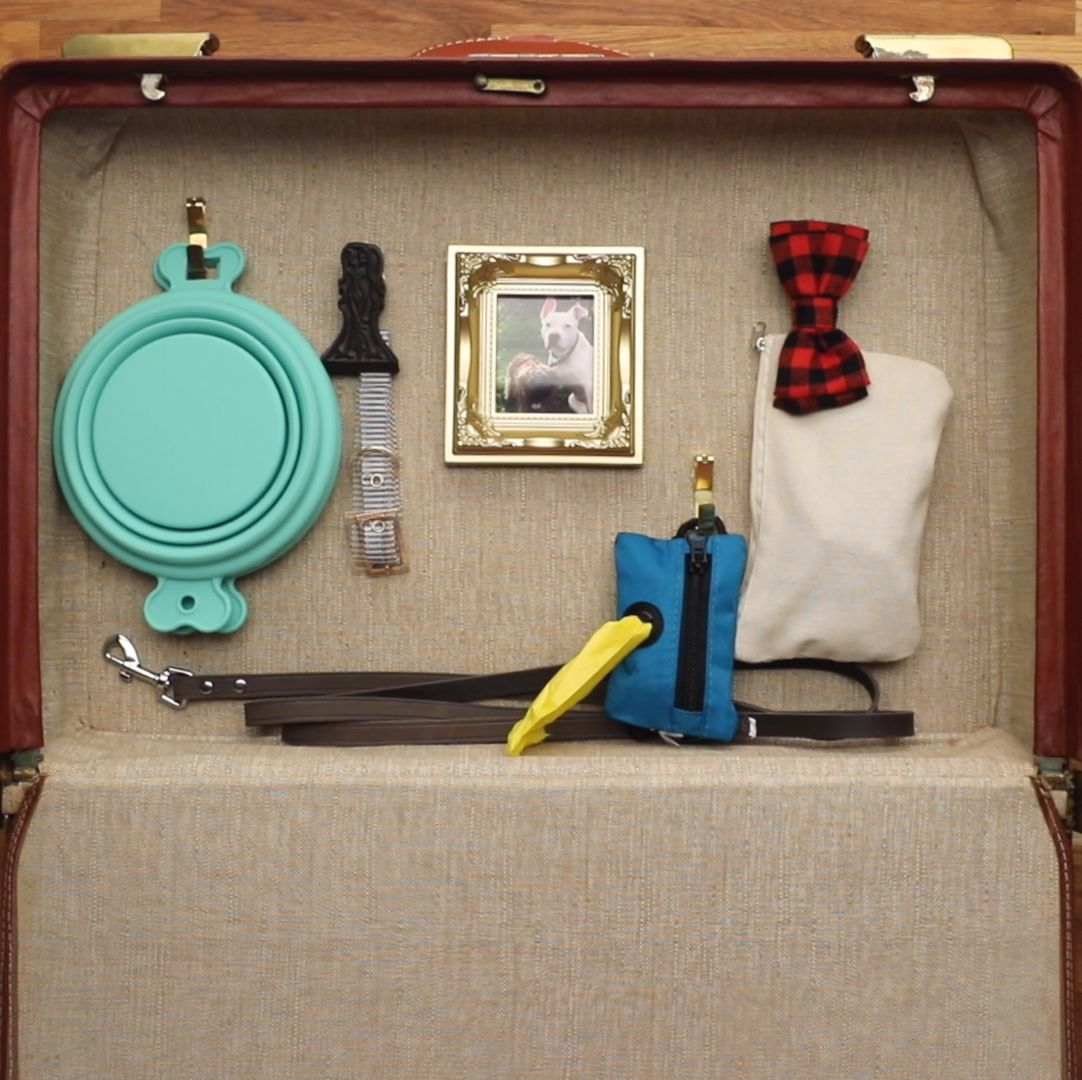 Doggy Road Trip Bag In 15 Minutes or Less