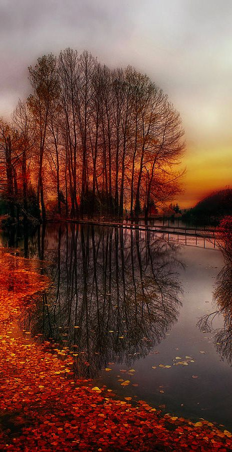 Autumn at Rhodope Mountain in Bulgaria • photo: Albena Markova on FineArtAmerica
