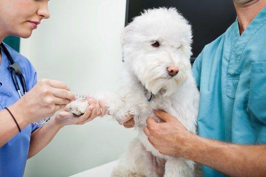 Job Duties Of A Veterinarian Veterinary Technicians At Vetmed - veterinarian job description