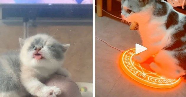 Here are the funniest, cutest and plain bizarre cat videos of the week! Enjoy!#cats #cutecats #catvideos #catsofinstagram #