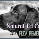 Flea Remedies