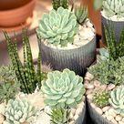 A Galaxy Full of Succulents For Your Home & Garden   Garden Tips   West Coast Gardens