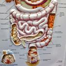 Colon (Large Intestine) Disorders - Spiritual Meaning, Causes and Healing